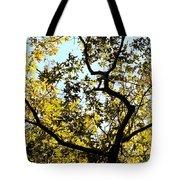 Illuminated Oak Tree Tote Bag