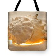 Illumination Series Sea Shells 17 Tote Bag