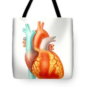 Illustration Of The Human Heart Tote Bag