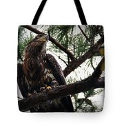 Immature American Bald Eagle Tote Bag