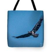 Immature Bald Eagle In Flight Tote Bag