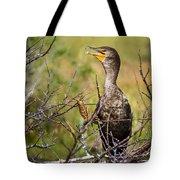 Immature Cormorant Tote Bag