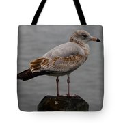 Immature Glaucous Gull Tote Bag