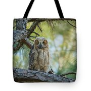 Immature Great Horned Owl Tote Bag
