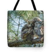 Immature Great Horned Owls Tote Bag