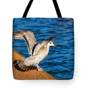 Immature Herring Gull At The Harbour Tote Bag