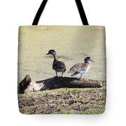 Immature Wood Ducks Tote Bag