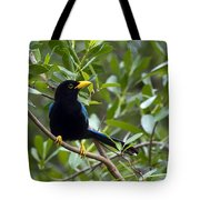 Immature Yucatan Jay Tote Bag