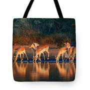 Impala Herd With Reflections In Water Tote Bag