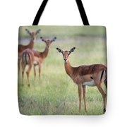 Impalas Aepyceros Melampus Petersi Tote Bag