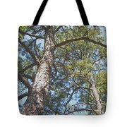 In New Jersey's Pinelands Tote Bag