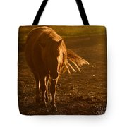 In The Golden Light Tote Bag