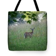 White-tailed Deer In Meadow  Tote Bag