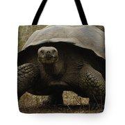 Indefatigable Island Tortoise Galapagos Tote Bag