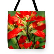Indian Paintbrush I I Tote Bag