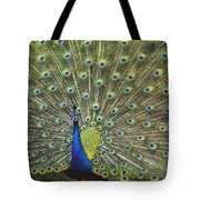Indian Peafowl Male Displaying Tote Bag