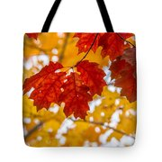 Indian Summer Trees Tote Bag