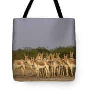 Indian Wild Ass Herd Gujarat India Tote Bag