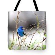 Indigo Bunting - 17 Tote Bag