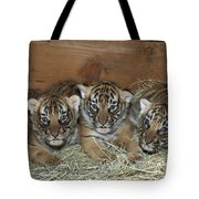 Indochinese Tiger Cubs In Sleeping Box Tote Bag