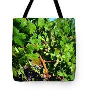 Inglenook Vineyard -10 Tote Bag