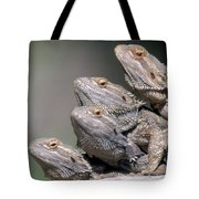 Inland Bearded Dragons Tote Bag