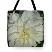 Innocent White Dahlia  Tote Bag