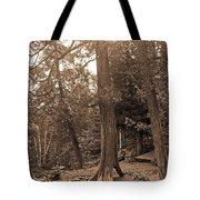 Interesting Tree Tote Bag
