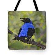 Irena Puella Asian Fairy Bluebird Tote Bag