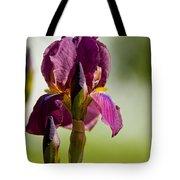 Iris Pictures 117 Tote Bag