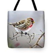 Irruptive Bird Common Redpoll Tote Bag