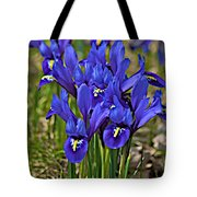 Ithaca Spring Tote Bag