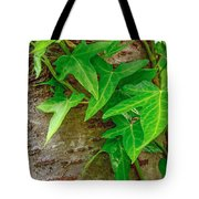 Ivy Wrapped Tree Trunk Tote Bag