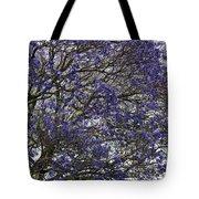 Jacaranda Tree Tote Bag