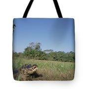 Jacare Caiman In Marshland Pantanal Tote Bag