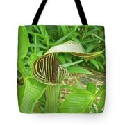 Jack In The Pulpit - Arisaema Triphyllum Tote Bag