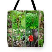 Jack-in-the-pulpit Wildflower    Arisaema Triphyllum Tote Bag
