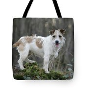 Jack Russell Dog In Autumn Setting Tote Bag