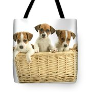 Jack Russell Terrier Puppies Tote Bag