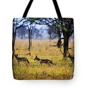 Jackals On Savanna. Safari In Serengeti. Tanzania. Africa Tote Bag