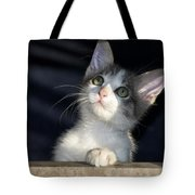 Jackson Is Always Inquisitive Tote Bag