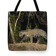 Jaguar Cuiaba River Brazil Tote Bag