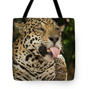 Jaguar Panthera Onca Licking Its Paw Tote Bag