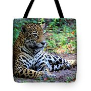 Jaguar Resting From Play Tote Bag