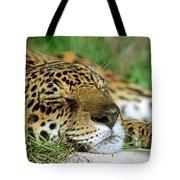 Jaguar Resting Tote Bag