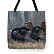 Jake Eastern Wild Turkeys Tote Bag by Linda Freshwaters Arndt