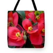 Jamaican Poinsettia Tote Bag