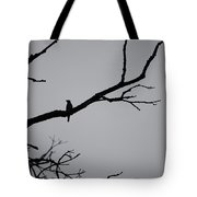 Jammer Bird Silhouette 1 Tote Bag