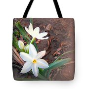 January 2014 Paper-whites In Bloom Tote Bag