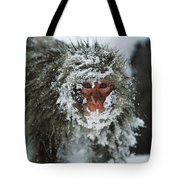 Japanese Macaque Covered In Snow Japan Tote Bag